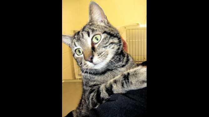 POTW-Doug-the-cat-IMG 8011