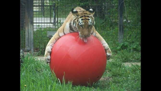 assiniboine-park-zoo-kendra