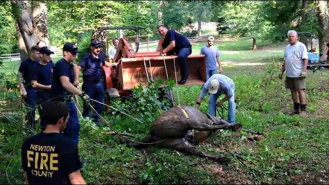 horse-rescueWEB
