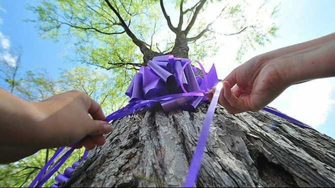 relay-purple-bow-on-tree