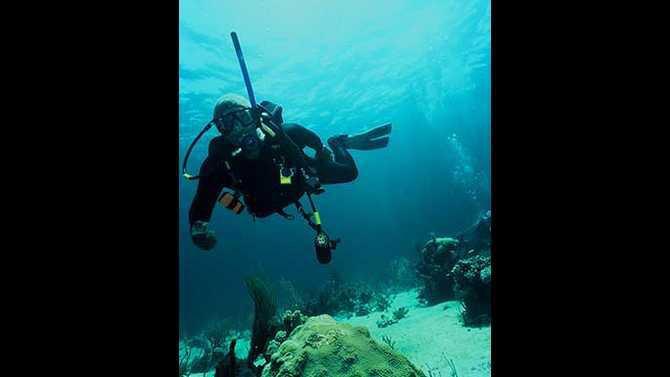 shark-diving-1205360-R1-E001