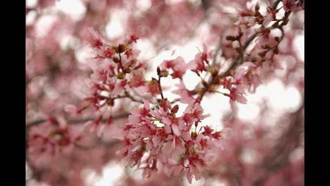flower-tree1