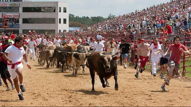 Great-Bull-Run11